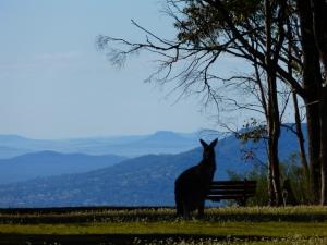 Bundella Lookout, Coolah Tops NP