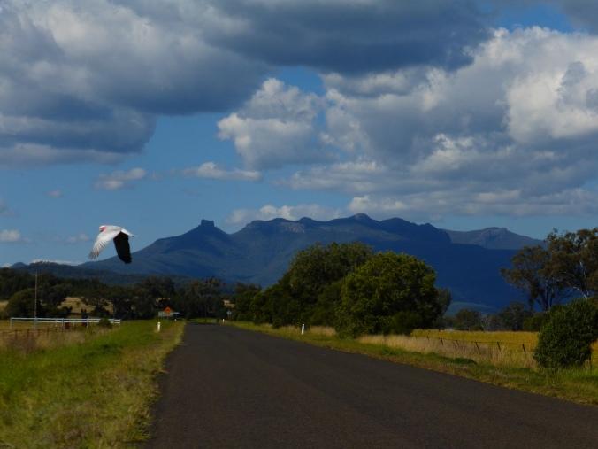 Mt Kaputar NP
